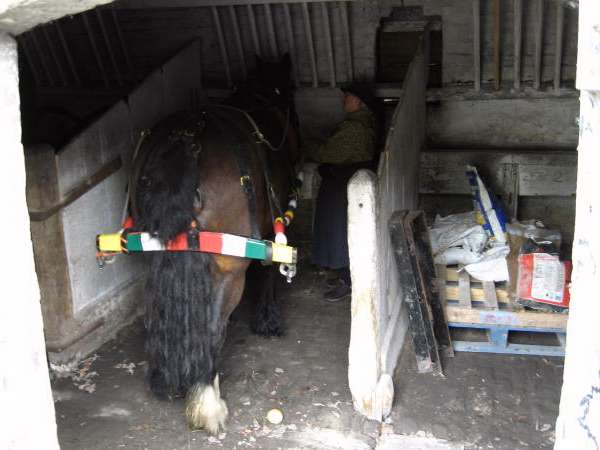 Wheelock stable